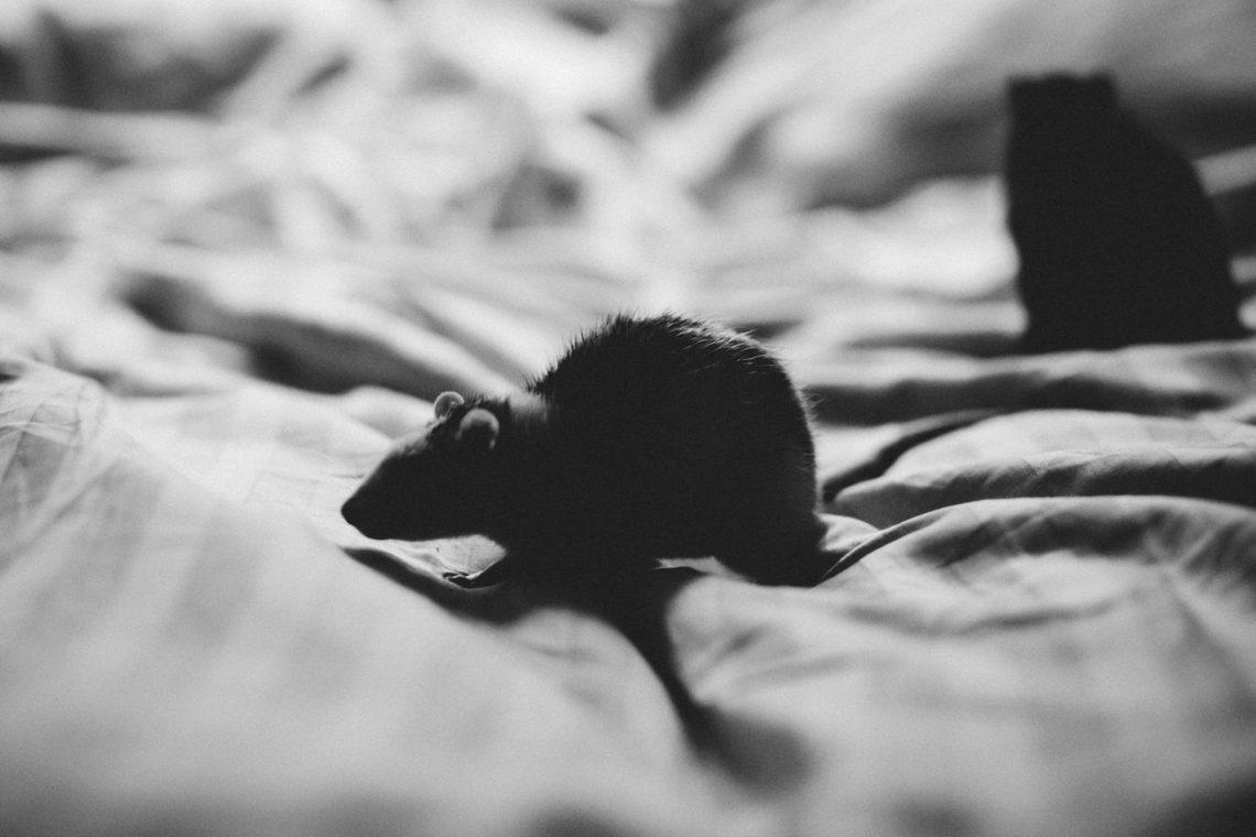 5 signes qu'il est temps d'appeler un exterminateur pour se débarrasser des souris dans votre maison